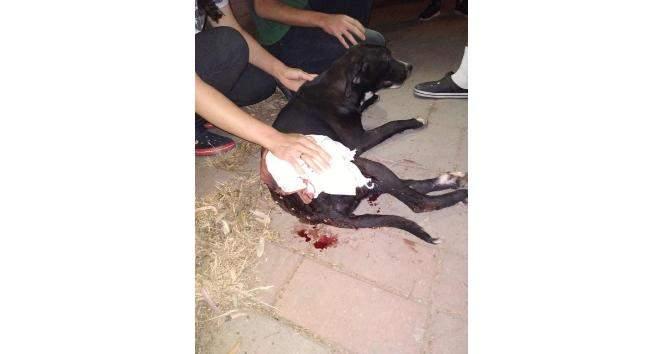 Magandalar dehşet saçtı: Tabancadan çıkan mermi köpeğe isabet etti