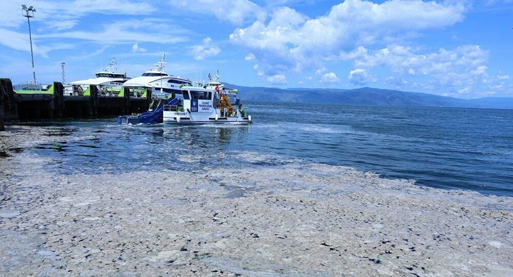 Mavi bayraklı plaj da salya istilasında