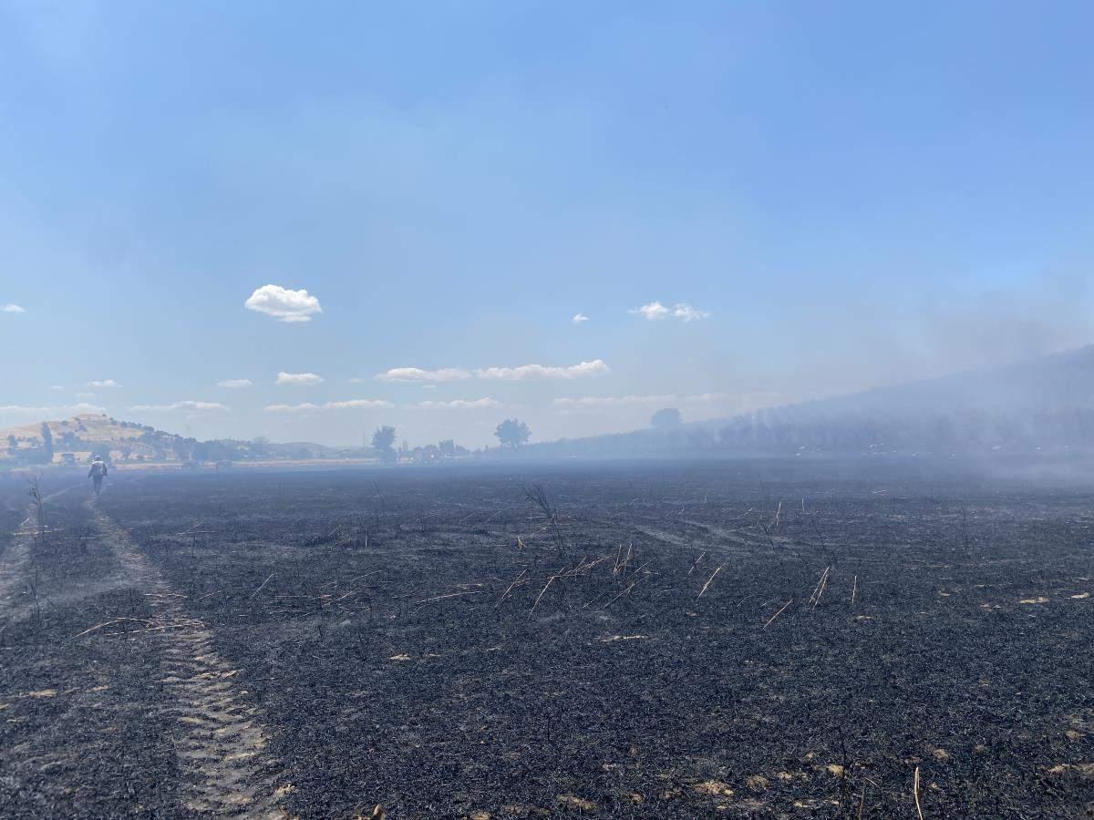 Tire de nar ağaçları ile buğday tarlalarının bulunduğu alanda çıkan yangın söndürüldü