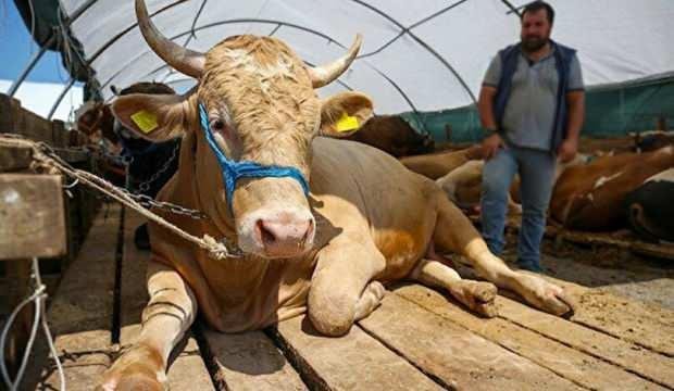 Bakan Pakdemirli: Satılamayan kurbanlıkları Et ve Süt Kurumu alacak