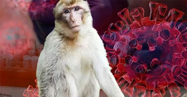 Çin, 'Monkey B' virüsünden ilk can kaybını bildirdi