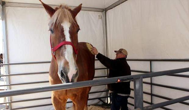 Dünya'nın en uzun boylu atı