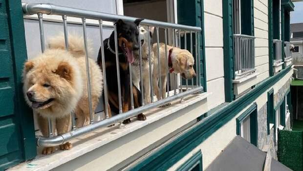 Evcil hayvan otelinde Kurban Bayramı yoğunluğu