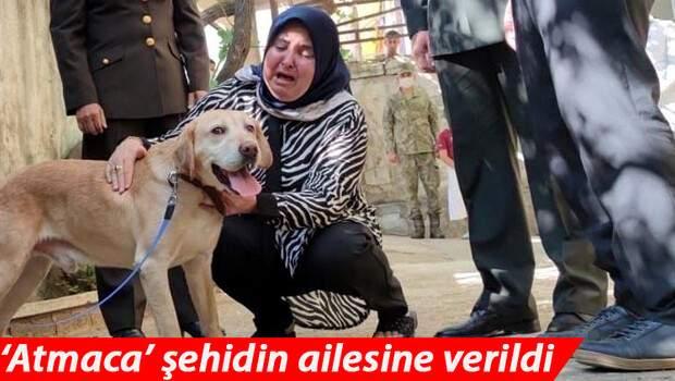 Şehit onbaşı Ahmet Akdal'ın köpeği 'Atmaca' şehidin ailesine verildi… Gözyaşlarına boğuldular