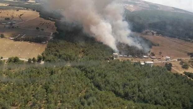 Son dakika… İzmir Bornova'da orman yangını