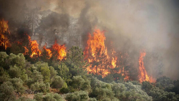 Nereye gidiyor, neye yol açıyor? İki zıt sonucu var… Orman yangınlarında duman tehdidi!