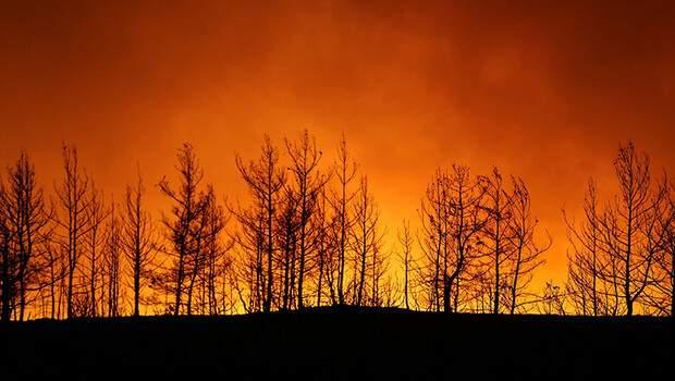 Türkiye'deki orman yangınlarına 6 ülkeden hava desteği geldi