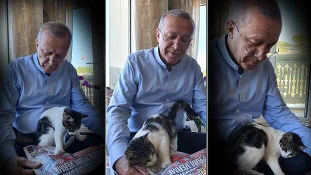 Cumhurbaşkanı Recep Tayyip Erdoğan, torununun kedisiyle fotoğrafını paylaştı